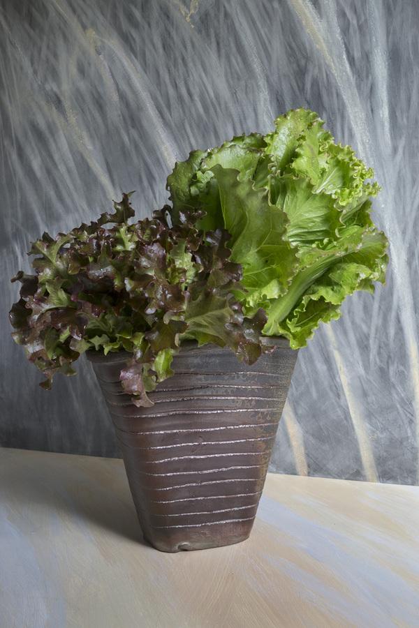15-white-lettuce-2015.jpg