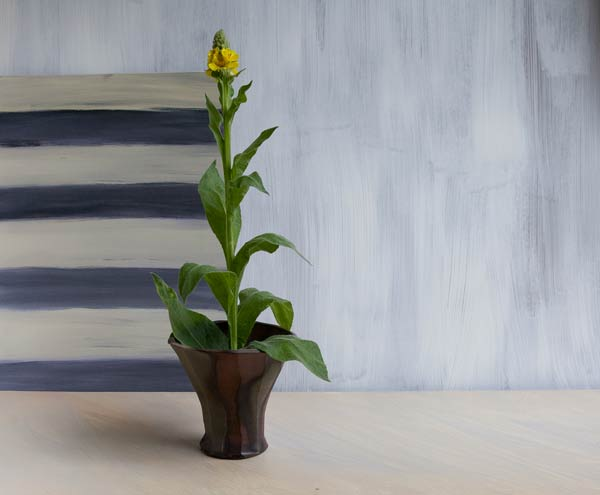 http://catherinewhite.com/rough-ideas/images/12-mullein.jpg