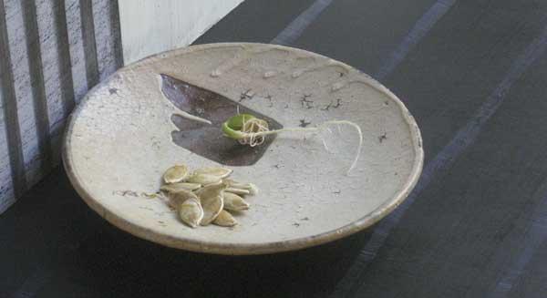 3-pumkin-seed-drip.jpg