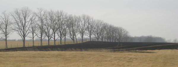 burned-field.jpg