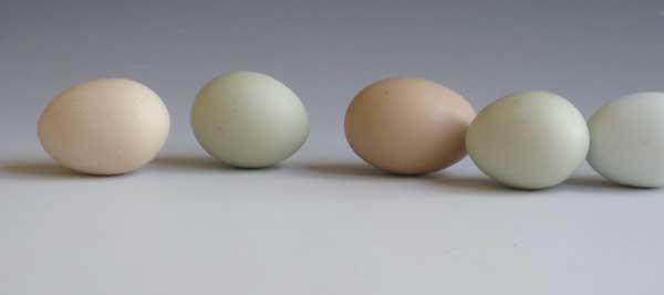 egg-line.jpg